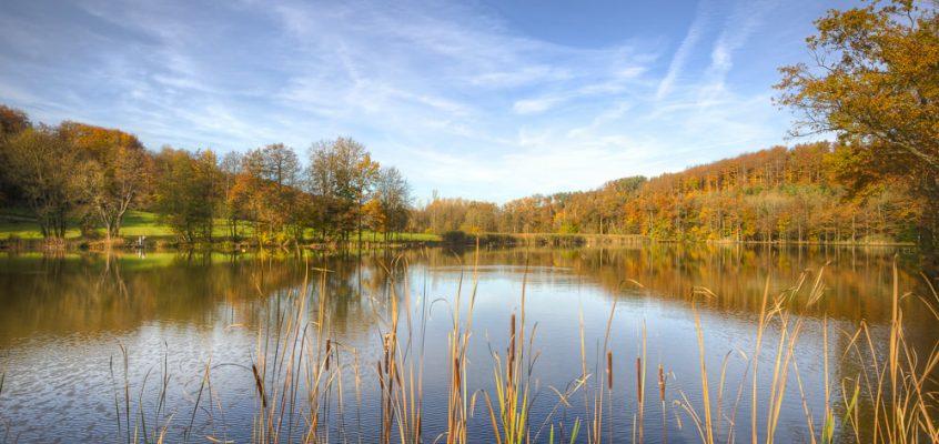 Herbst am Neumühlsee