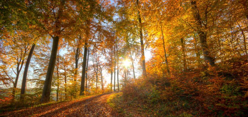 Herbst am Brettachtal