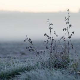 Der Frost hält Einzug