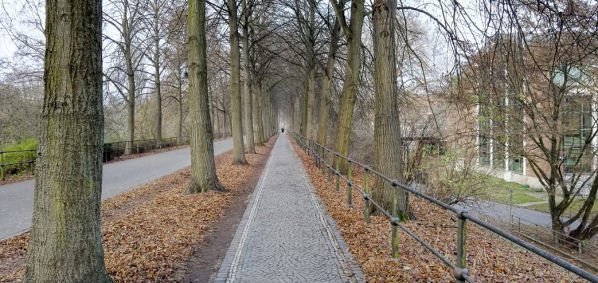 Honor 7 – Allee Münster