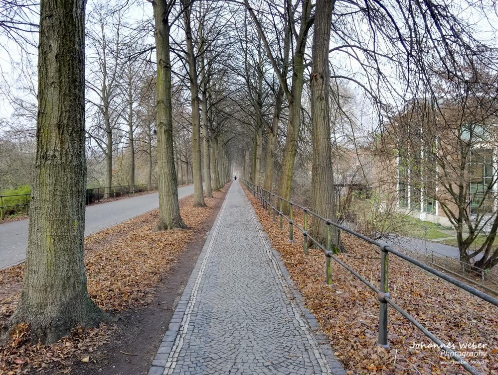 Allee Münster